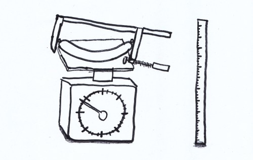 Wie schaut das ideale Würstel zum Kremser Senf aus