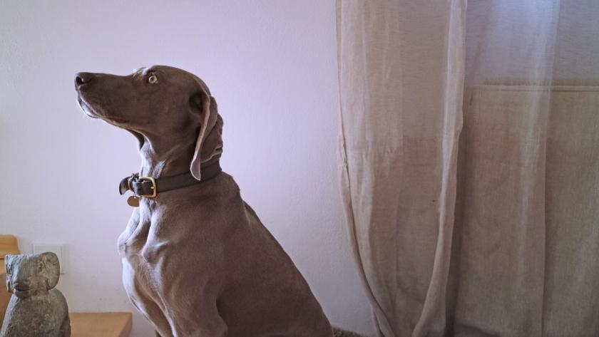 Antonias Hund Steffi.